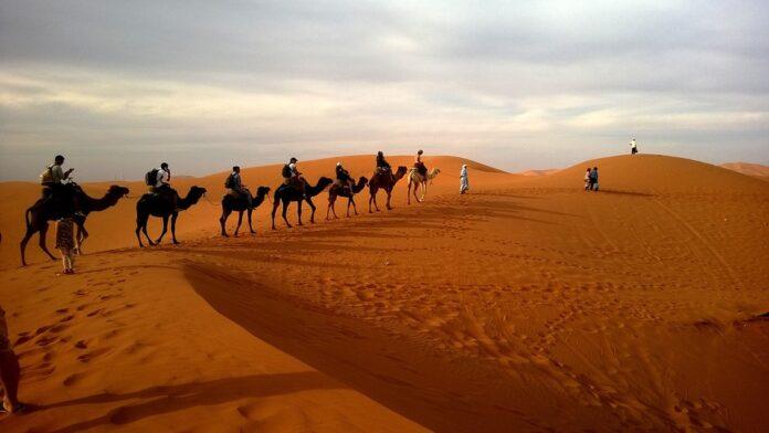 Der Seminarraum ist die Wüste
